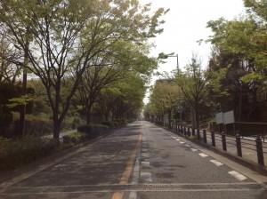 『随筆』春の日